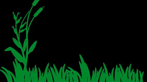 Vote For Your Favorite Lawn Care Service